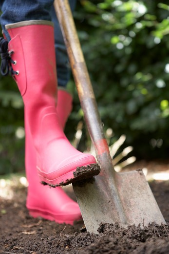 Stock Photo: 1888R-43607 Woman digging in garden