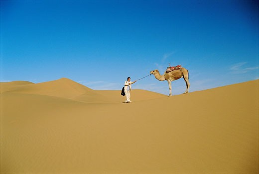Woman outdoors walking in the desert with a camel far away : Stock Photo