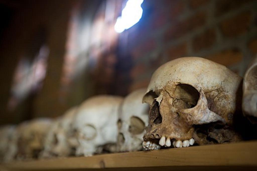 Stock Photo: 1889-42937 Ntarama, Rwanda; Skulls from Ntarama genocide lined up on shelf in church