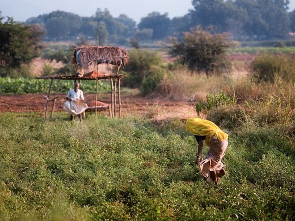 Rajasthan,India;Farming in Aravalli Hills : Stock Photo