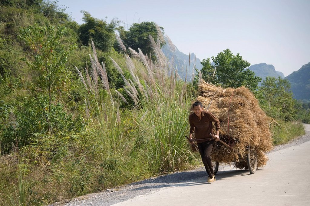 Man carting hay down a road : Stock Photo
