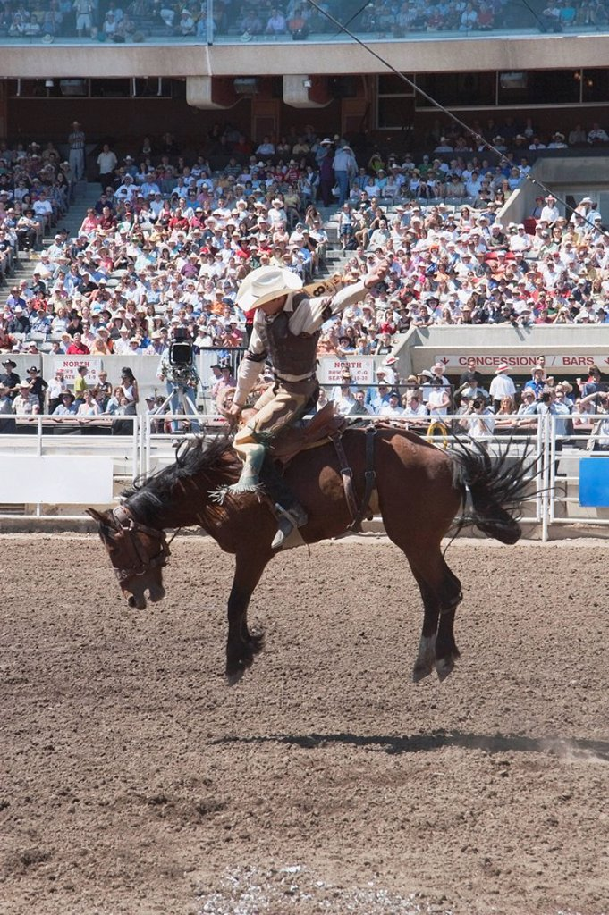Stock Photo: 1889-45652 Saddleback rider, Calgary Stampede Rodeo, Calgary, Alberta, Canada