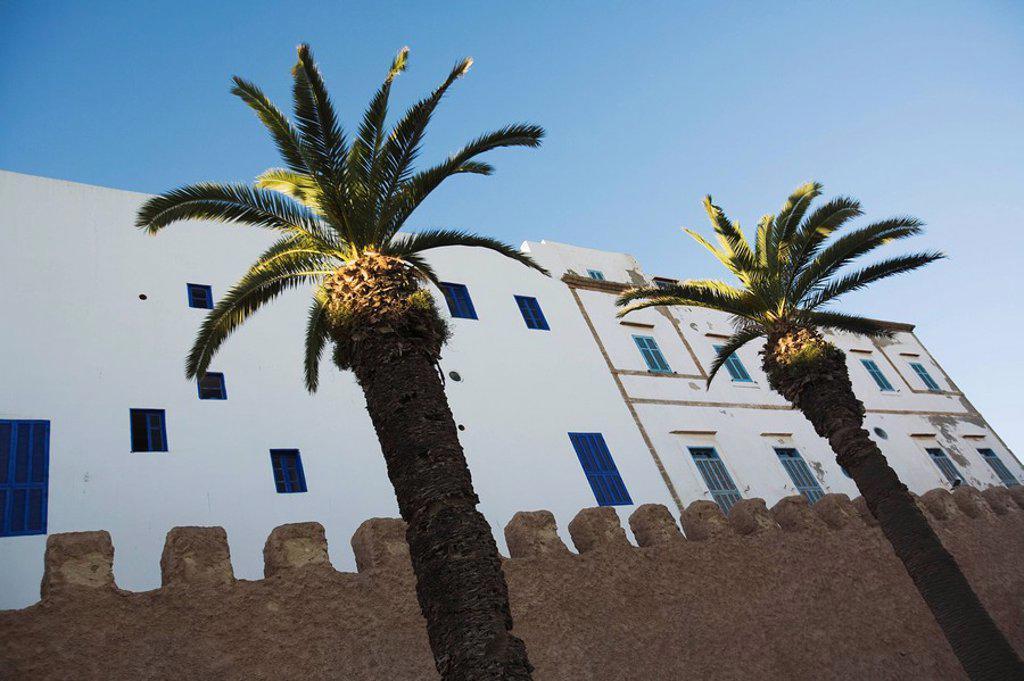 Palm trees and exterior of building, Essaouira, Morocco : Stock Photo