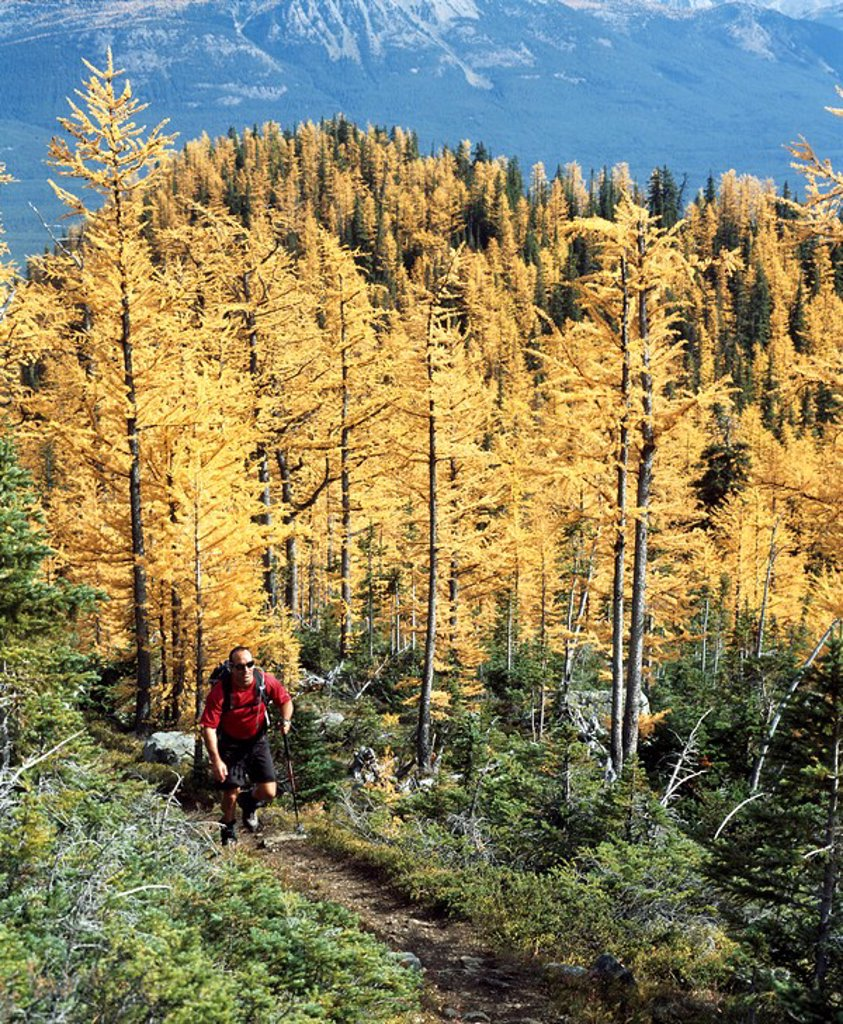 Stock Photo: 1889-59086 Hiking in the Rocky Mountains, Banff, Alberta, Canada
