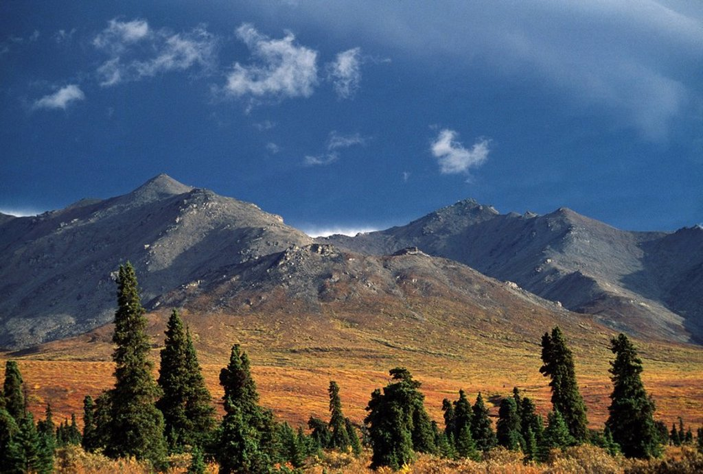 Primrose Ridge, Denali National Park, Alaska, United States of America : Stock Photo