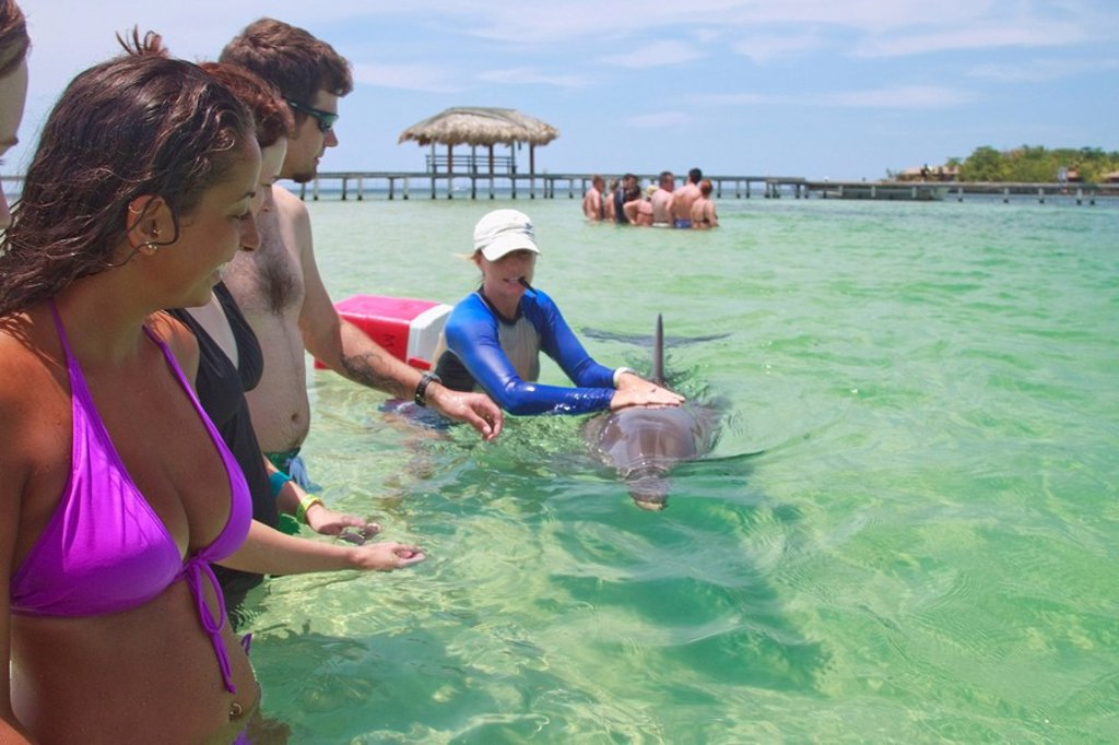 Roatan, Bay Islands, Honduras, A Trainer Working With A Bottlenose Dolphin Tursiops Truncatus With Tourists Watching At Anthony´s Key Resort : Stock Photo