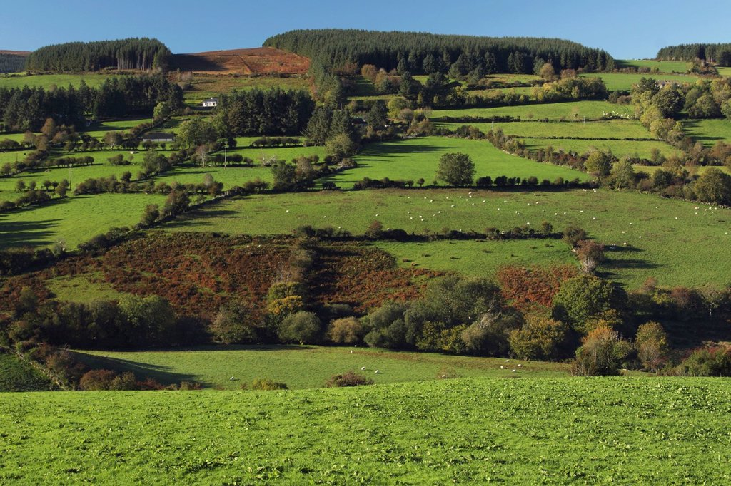 Stock Photo: 1889-62976 the nire valley in munster region, county tipperary, ireland