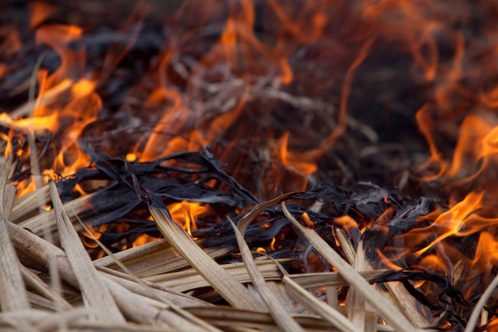 sugar cane fields are burned after they have been harvested near bias city, negros oriental, philippines : Stock Photo