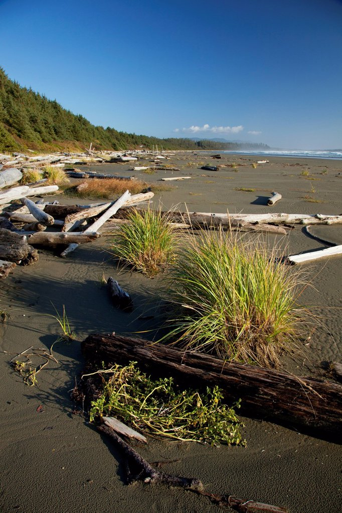 Drift Logs Pile Up Along Long Beach A Surfer´s Paradise In Pacific Rim National Park Near Tofino, British Columbia Canada : Stock Photo