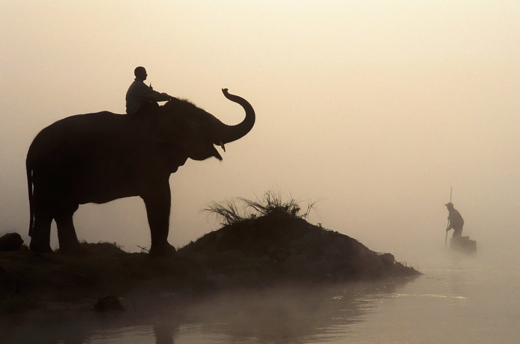 Stock Photo: 1889-74682 An Elephant With Its Mahout Stand At The Edge Of The Rapti River Near Sauraha And Chitwan National Park As A Man Pushes His Dugout Canoe Along The River, Nepal
