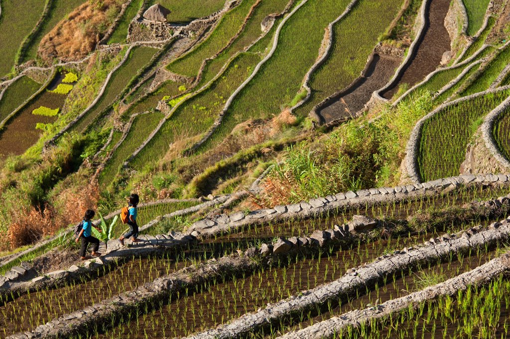 Stock Photo: 1889-76482 Two Kids Walk Along The Famous Rice Terraces, Batad Northern Luzon Philippines
