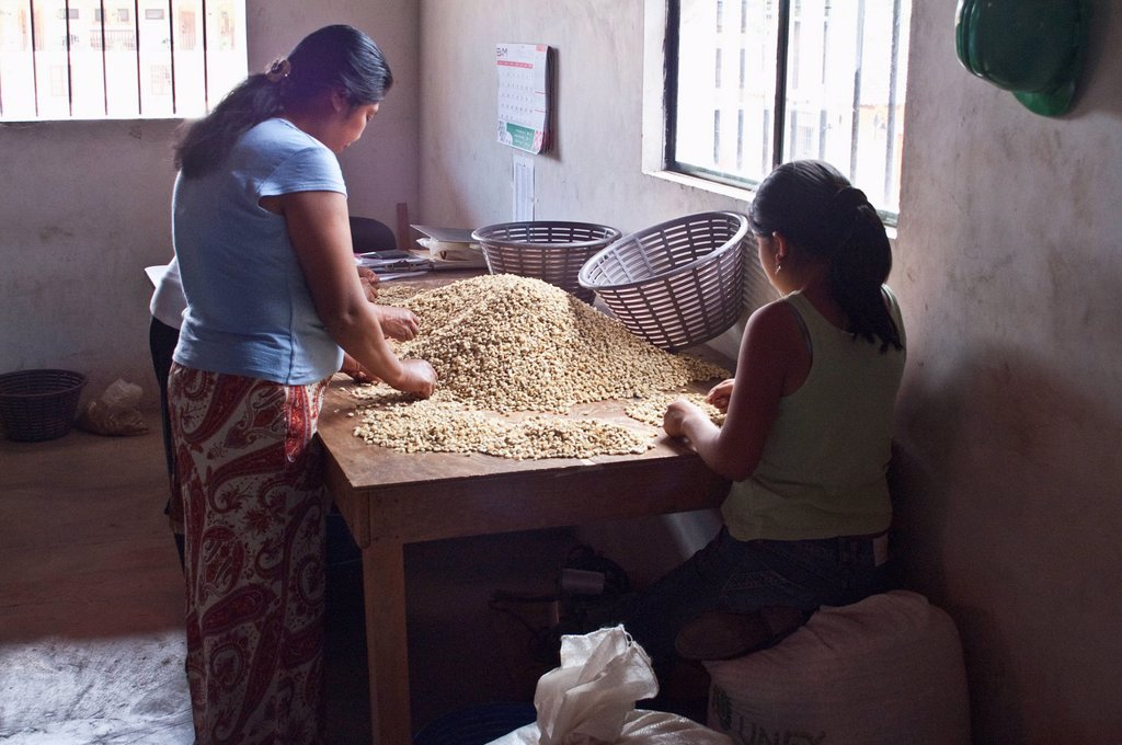 Stock Photo: 1889-76955 Woman Sorting Coffee Beans, Antigua Guatemala