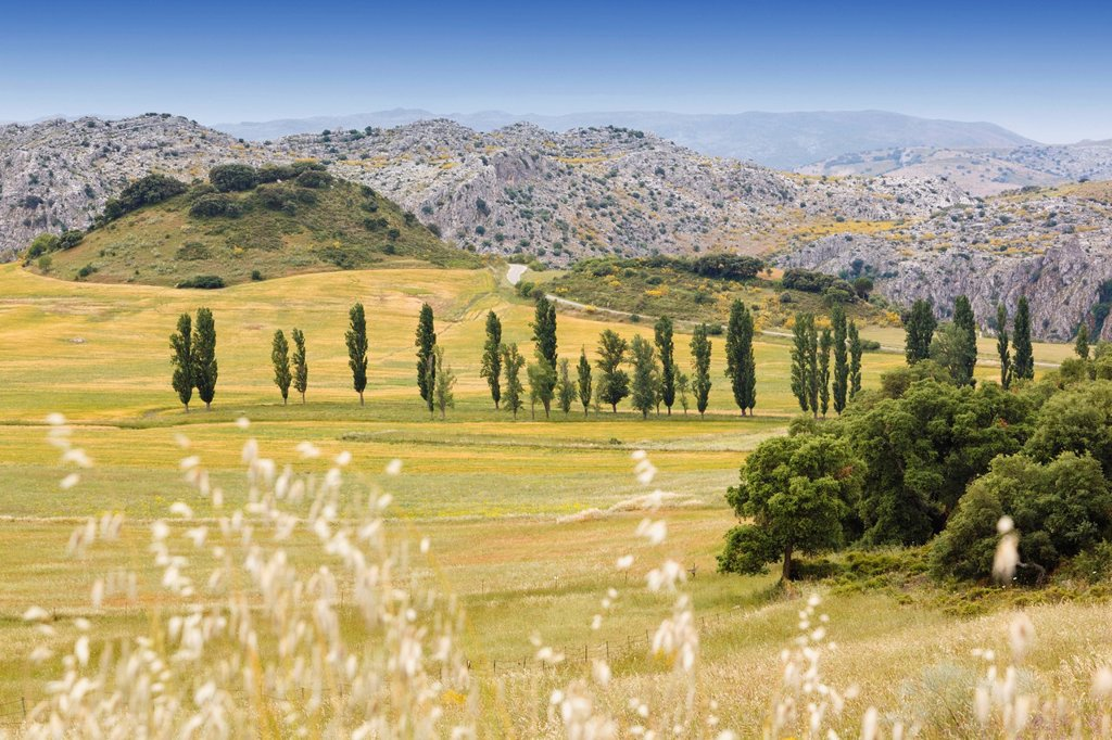 Stock Photo: 1889-79963 Landscape Near Montejaque, Malaga Province Andalusia Spain