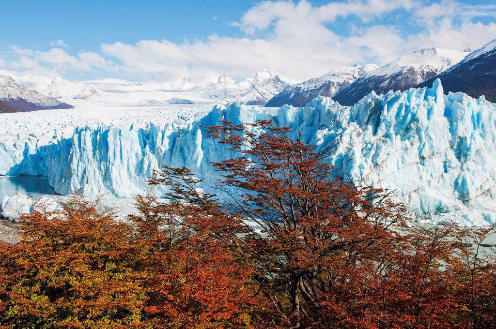Stock Photo: 1889-81130 Perito moreno glacier in autumn, patagonia argentina