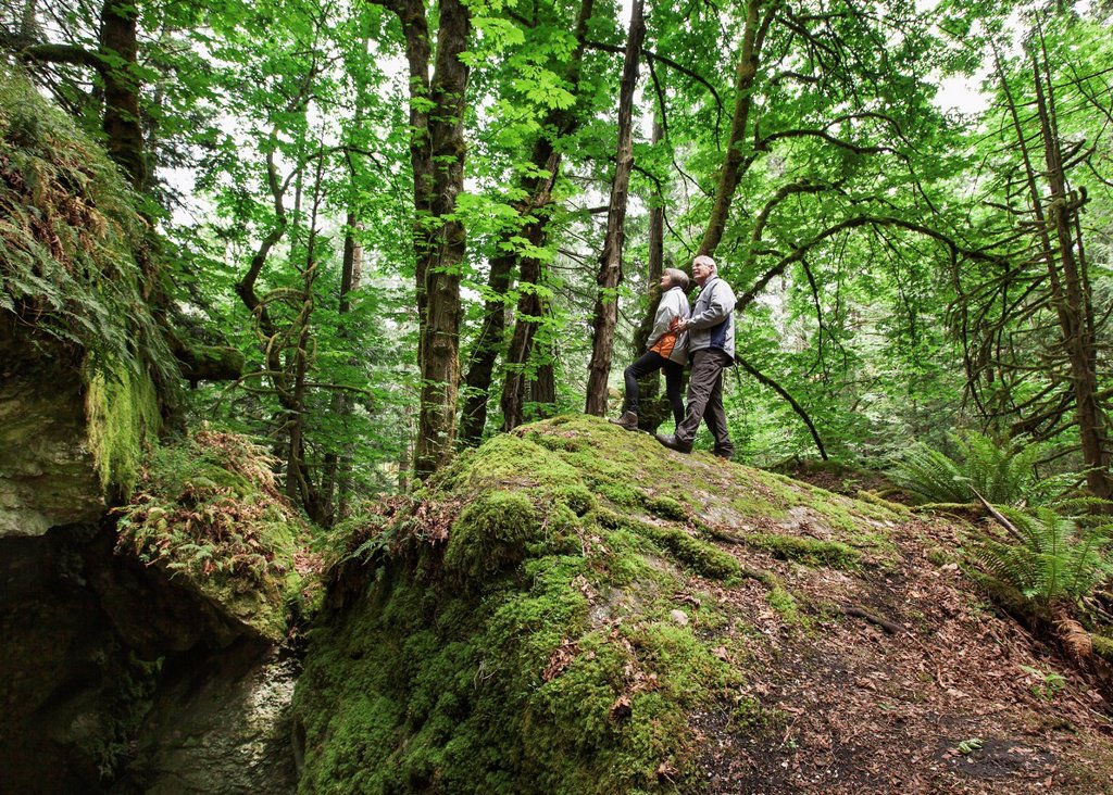 A senior couple hiking in the forest on mount tzouhalem in the cowichan valley, british columbia canada : Stock Photo