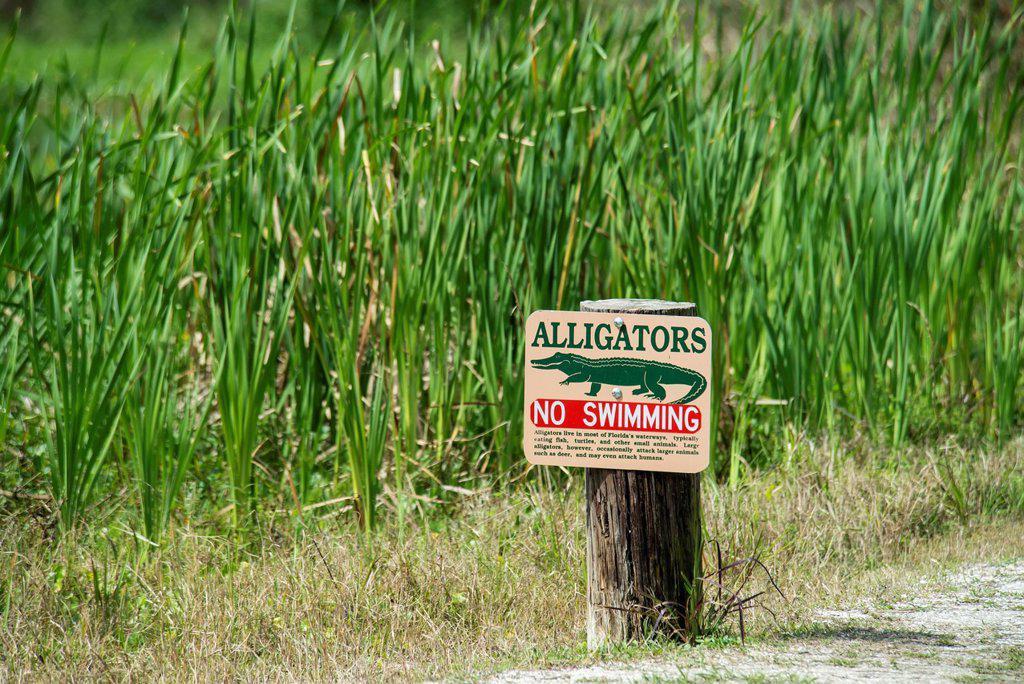 Stock Photo: 1889-91949 Alligator Warning Sign At Tosohatchee Wildlife Management Area; Florida, United States Of America