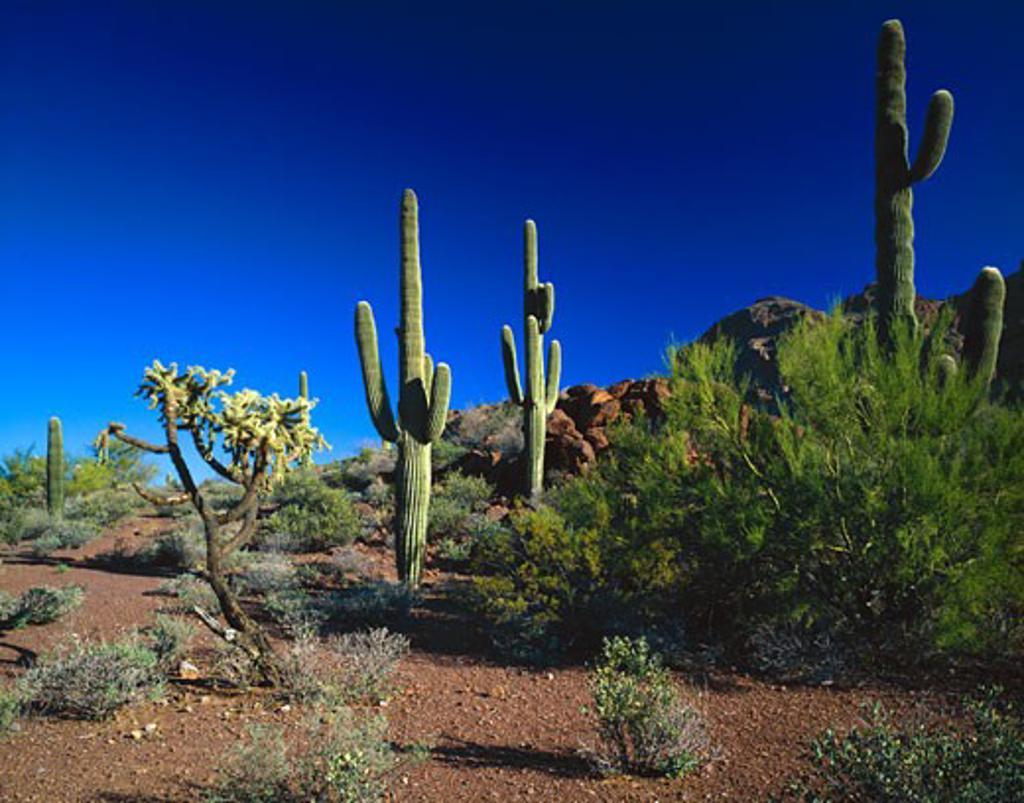 Stock Photo: 1889R-10472 Desert landscape