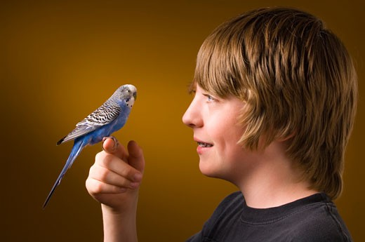 Boy with pet Budgie : Stock Photo