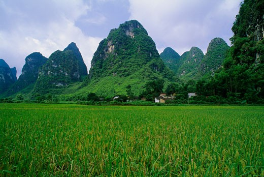 Stock Photo: 1889R-11258 Rice field near Yangshuo in China