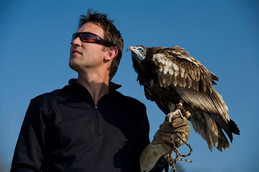 An Egyptian vulture (Neophron percnopterus)and a falconer : Stock Photo