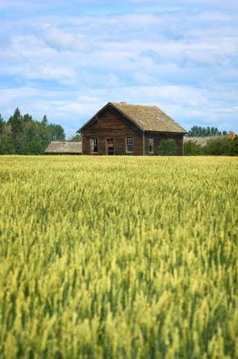 Farm building and crop : Stock Photo