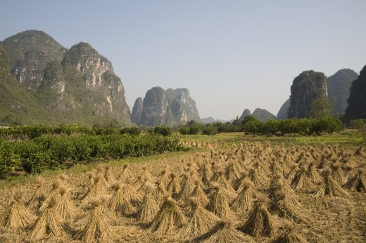 Stock Photo: 1889R-16473 Yangshou, China; rice fields