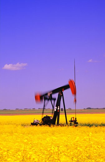 Oil pump jack in canola field : Stock Photo