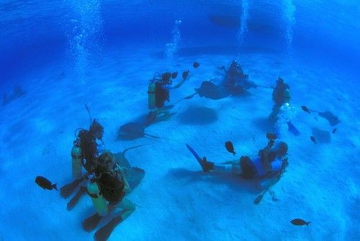 Stock Photo: 1889R-18645 Scuba divers on ocean floor with sting rays