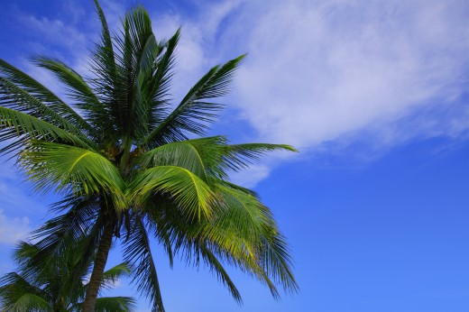 Palm tree against perfect sky : Stock Photo