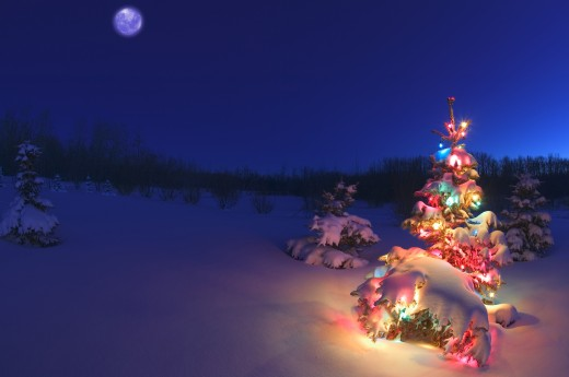 Outdoor Christmas tree at night : Stock Photo