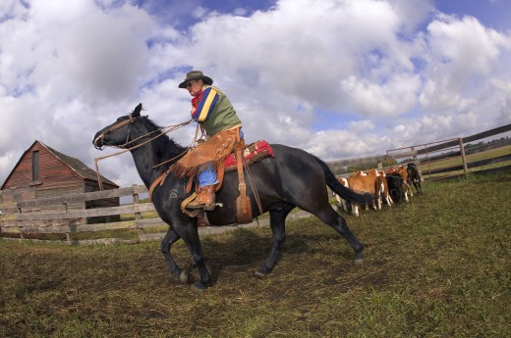 Cowboy working : Stock Photo