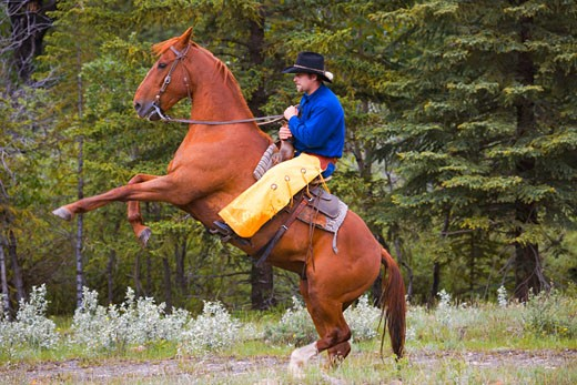 Cowboy on bucking horse : Stock Photo