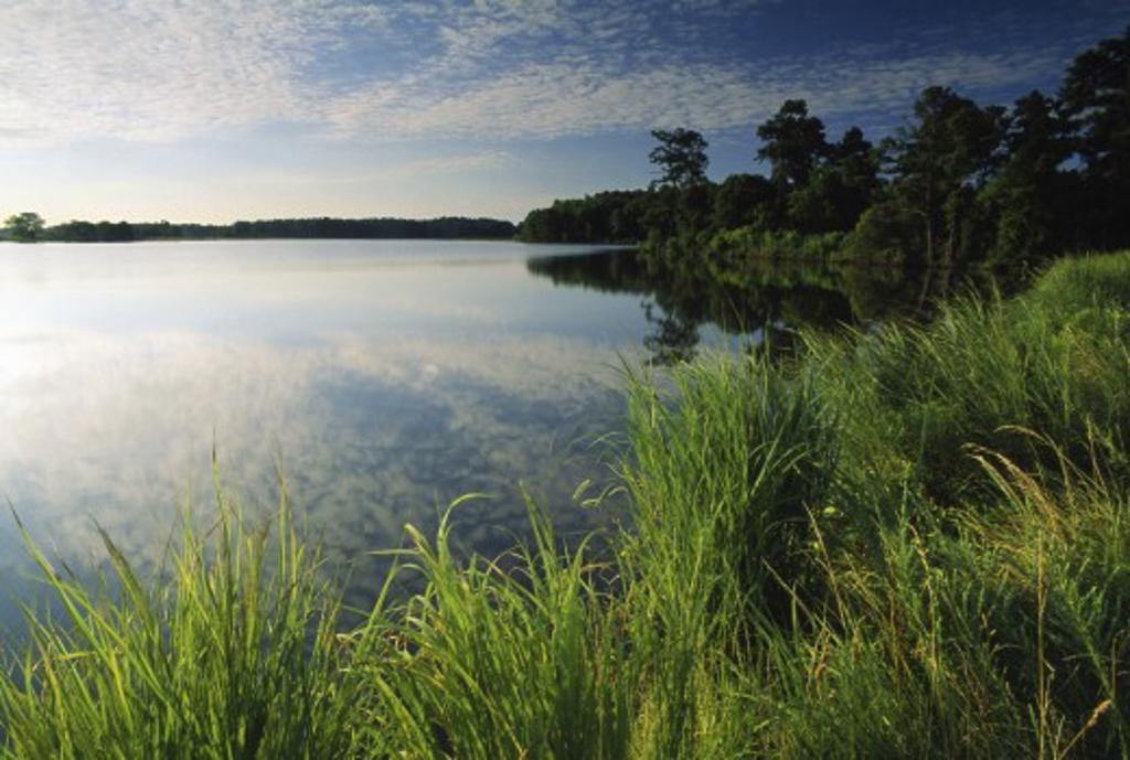 Blackwater National Wildlife Refuge : Stock Photo