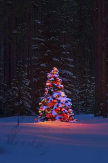 Christmas tree in a forest : Stock Photo