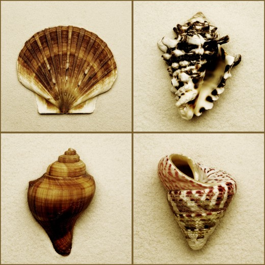 Seashell composite : Stock Photo