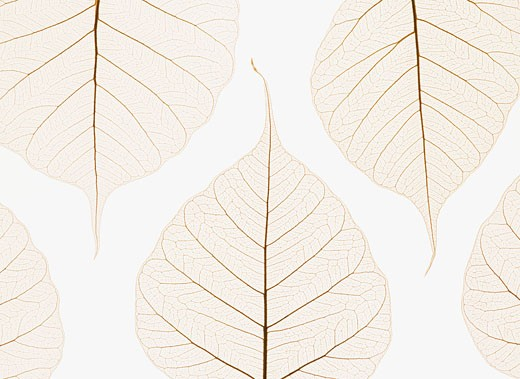 Arranged leaves : Stock Photo
