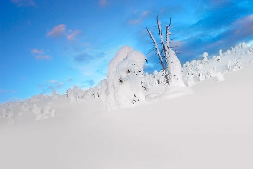 Snowy landscape with tree stumps covered in snow : Stock Photo