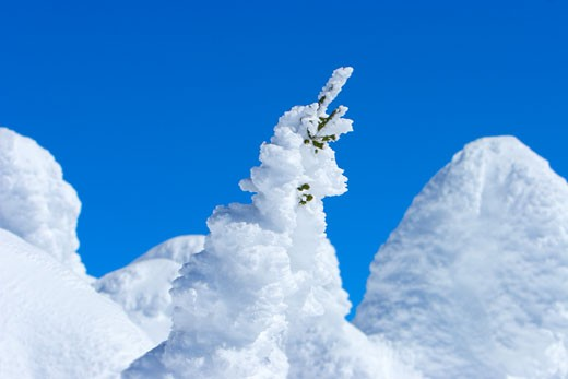 Trees completely covered in snow against blue sky : Stock Photo