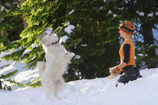 Girl playing with dog in the snow : Stock Photo