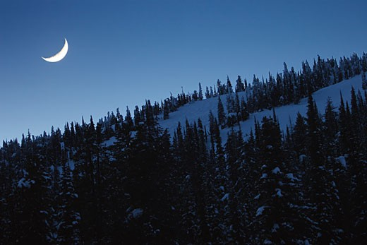 Trees in snow with crescent moon : Stock Photo