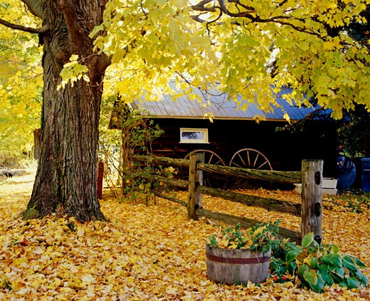 Stock Photo: 1889R-30796 Cottage with fall tree and fence