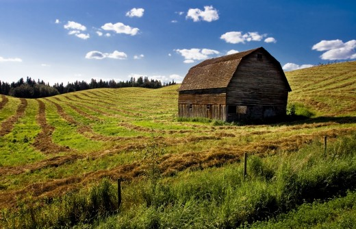 Old barn in a field : Stock Photo