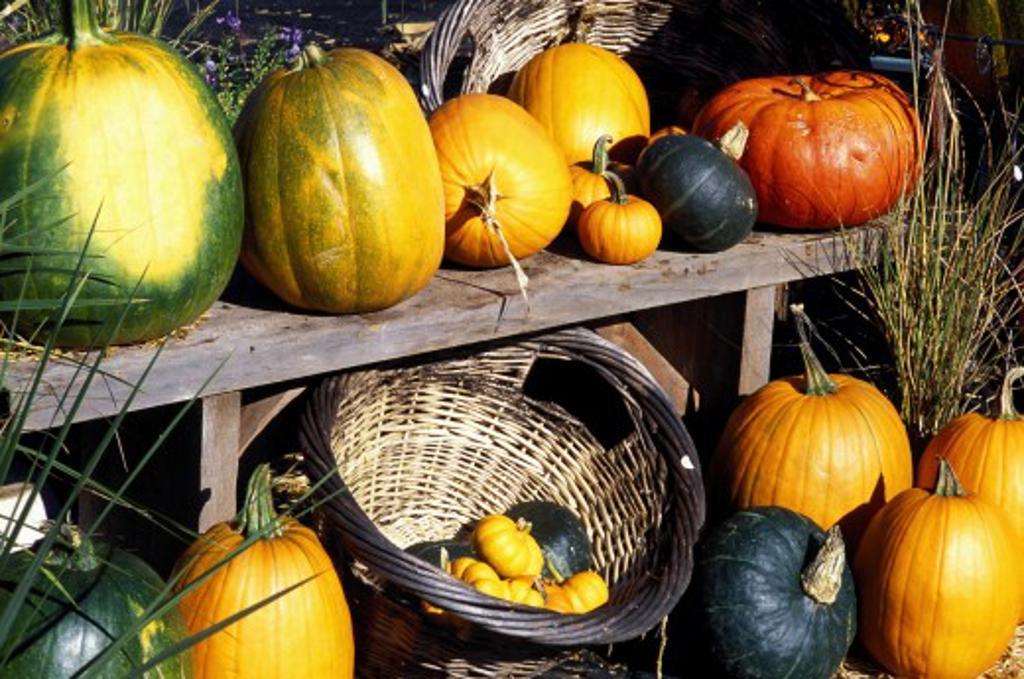 Autumn vegetables : Stock Photo