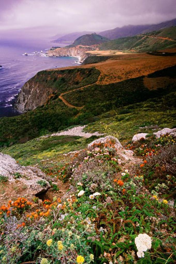 Stock Photo: 1889R-32301 Wild flowers, Big Sur coastline, California, USA