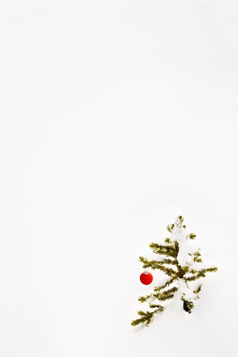 Christmas ornament hanging on a tree branch : Stock Photo
