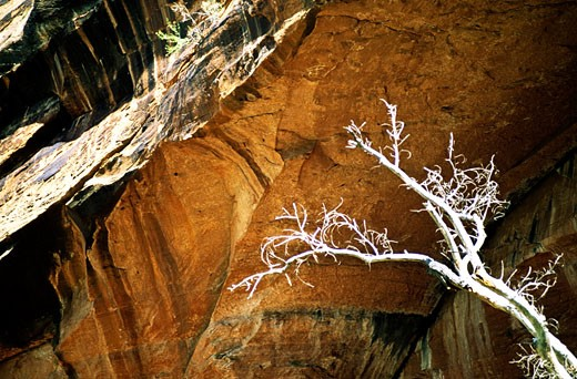 Dead tree in a cave : Stock Photo