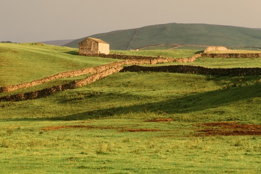 Stone fences and fields, Yorkshire Dales National Park, England : Stock Photo