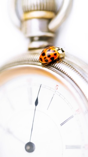 Stock Photo: 1889R-33986 Closeup of a ladybug on a stopwatch