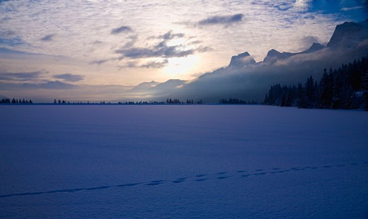 Stock Photo: 1889R-34519 Tracks across the snowy ground, Canmore, Alberta, Canada