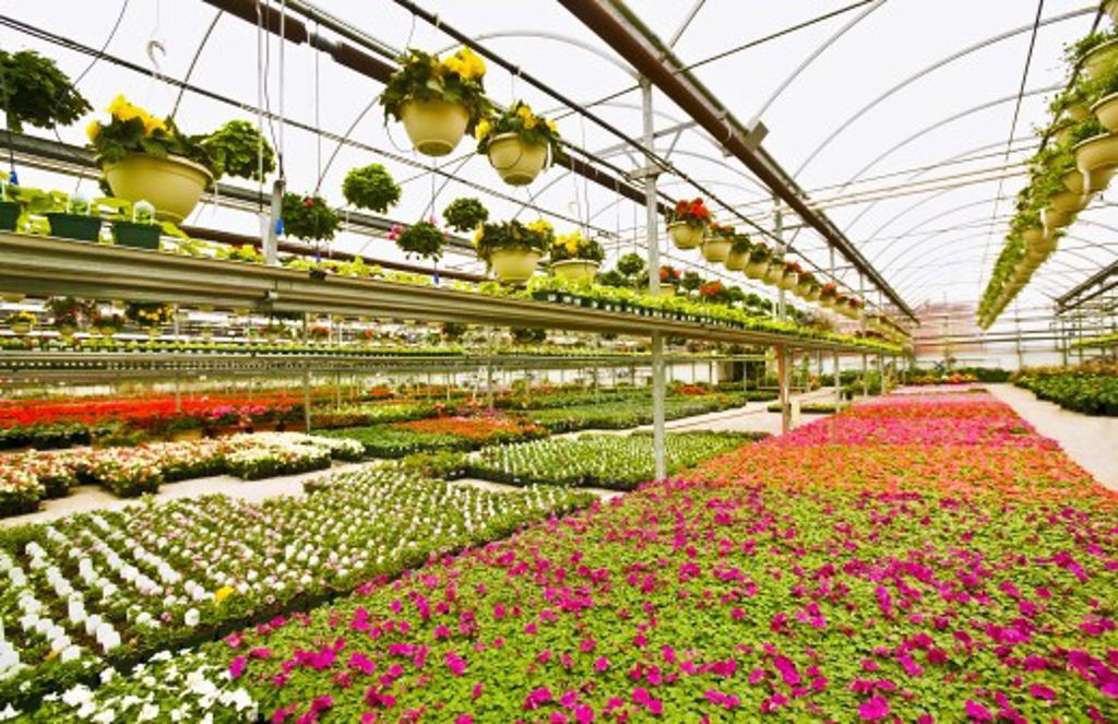Stock Photo: 1889R-34766 Greenhouse